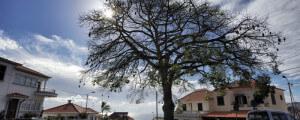 Rua da Silvestre Quintino de Freitas Funchal Choose Madeira Island